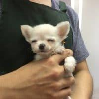 チワワとミックス犬!!