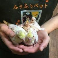 オカメインコと文鳥とセキセイインコ!!