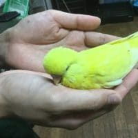 6月28日現在の手乗りの小鳥達!!
