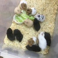 キンカチョウのヒナと十姉妹のヒナと・・・