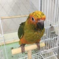 R3・7月3日現在の手乗りの鳥情報!