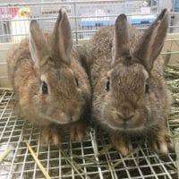 ウサギさんが来ました!!