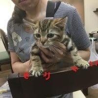 にゃんとミックス猫!!